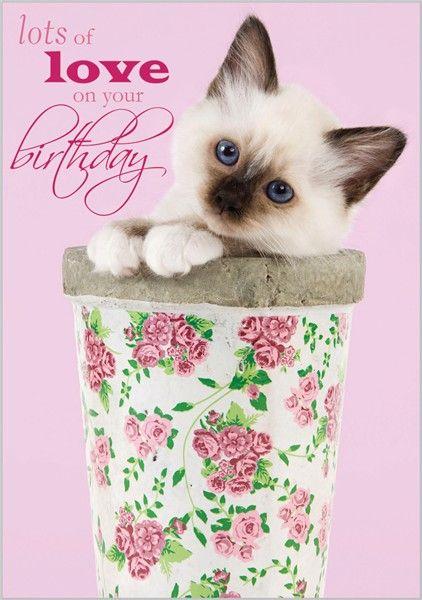 Birman Kitten In Flowerpot