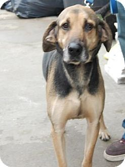 Brooklyn, NY - SEAN CASEY ANIMAL RESCUE - NO KILL - Hound (Unknown Type) Mix. Meet Arabi, a dog for adoption. http://www.adoptapet.com/pet/15112763-brooklyn-new-york-hound-unknown-type-mix