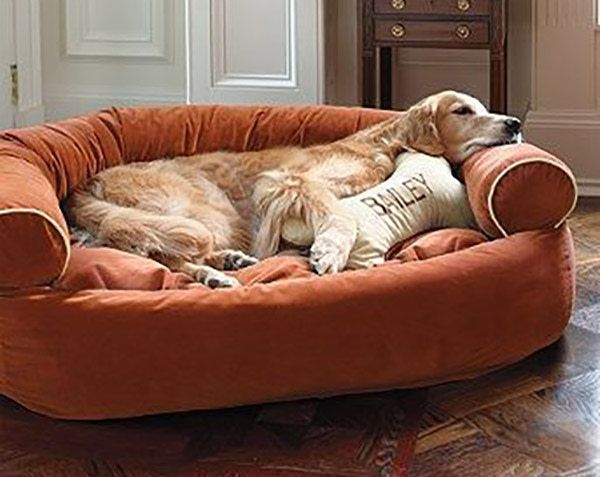 Five Easy Ways To Transition Your Pet Home From Summer To Fall