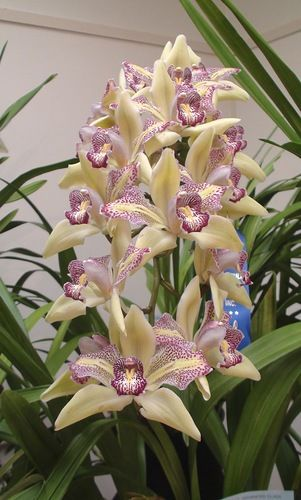 Peninsula Orchid Society Annual Show and Sale»