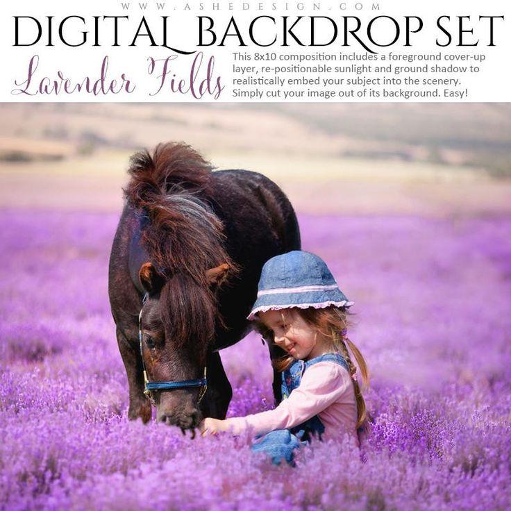 Digital Props 8x10 Backdrop Set - Lavender Fields ...