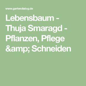 Lebensbaum - Thuja Smaragd - Pflanzen, Pflege & Schneiden