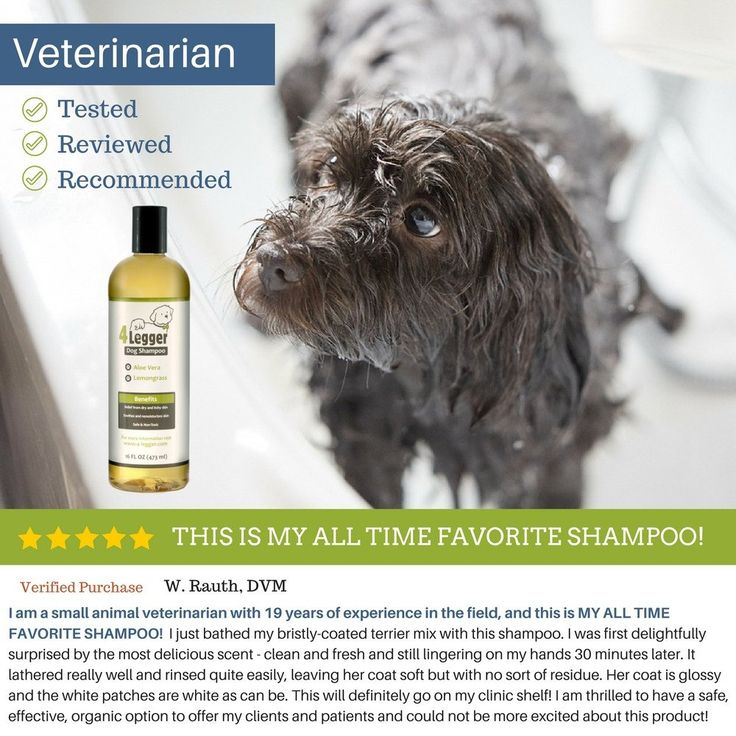 28 best pet bathing supplies images on pinterest doggies dog buy espree cucumber melon shampoo natural organic dog wash pet grooming new at online store solutioingenieria
