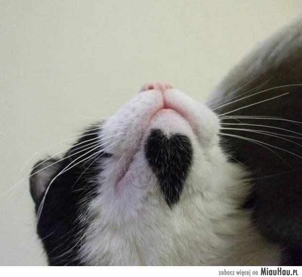 Kot z sercem na sierści!