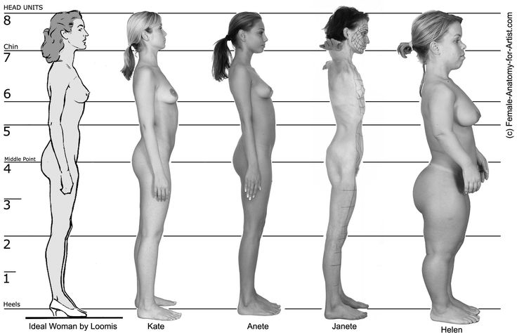 female proportions and different body types - side view. | female, Cephalic Vein