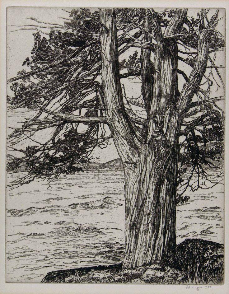 Helen A. Loggie(American, 1895–1976) Juniper 1929 etching via