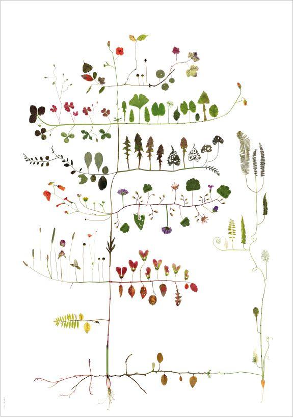 Tree: Graphic, Illustrations, Lottaolsson, Art, Trees, Flower, Lottas Träd