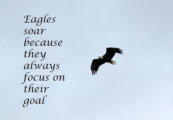 I Really Like This Quote By Author Unknown Eagles Soar Because They Always Focus On Their Goal T Focus On Your Goals Photography Keywords Focus On Yourself