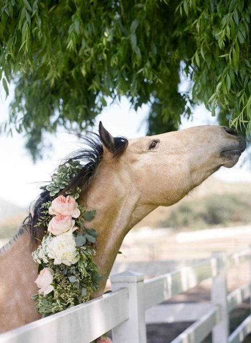 This beautiful horse looks all ready to attend a wedding, with the flowers in his/her mane. Lovely.