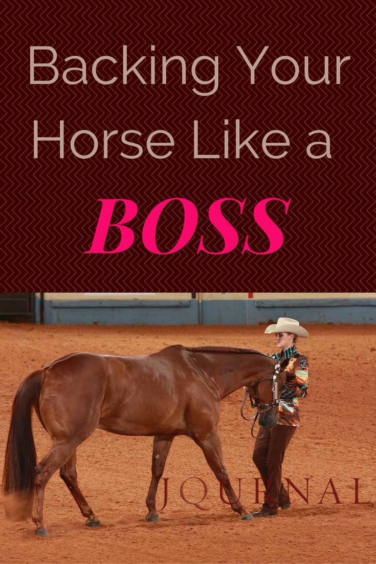 Backing your horse is a common maneuver in showmanship classes, so it's important to do it correctly and seemingly effortlessly.