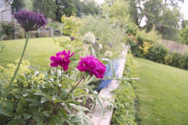 Las peonías son unas exuberantes flores que tienen grandes admiradores y fervientes cultivadores en todo el mundo. Son las flores de unos arbustos originarios de China. Forman parte de su cultura a…