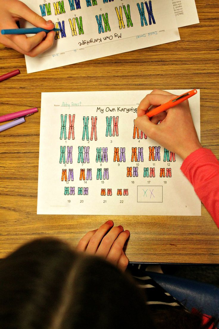 Color Your Own Karyotype Independent Assortment Lesson For High School Biology High School Biology Teaching Biology Activities Middle School Science Experiments [ 1104 x 736 Pixel ]