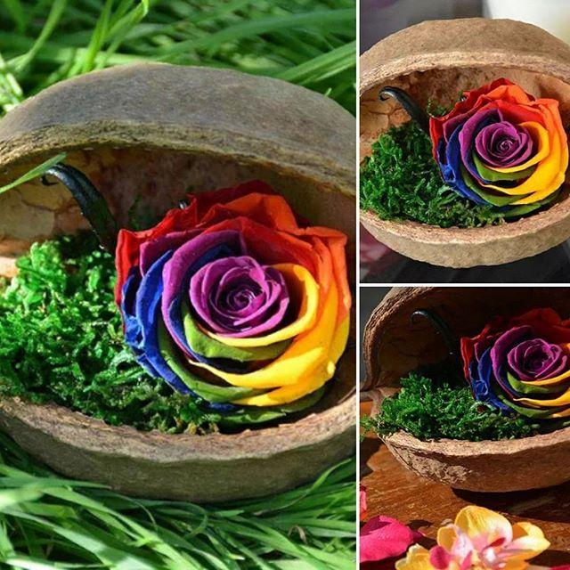 les 3261 meilleures images du tableau fleurs et plantes