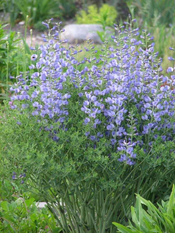 282 best nom des vivaces images on pinterest landscaping for Low maintenance summer plants