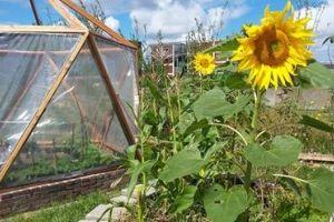 Blij maken met een dode merel. Blog van een bijzondere dag in een bijzondere tuin in Haarlem