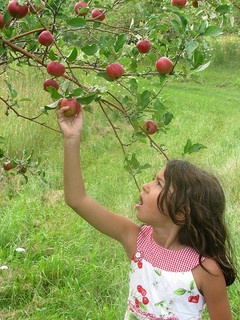 Pick Your Own Apple Orchards in Northeast Ohio