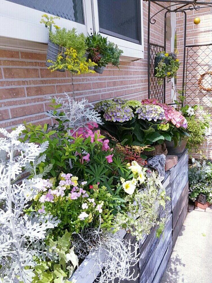 『玄関周りの可愛いお花たち🍀😌🍀 暇さえあれば配置がえ(笑) ペイントしたリンゴの木箱が花台です❤』はなはなさんが投稿したセダム,多肉のハンギング,金魚草,ペチュニア,秋色アジサイ,ハイドランジア マジカルシリーズ,手作り,あじさいコンテスト,かわいい♡,『手作り花壇』コンテスト,きれい,ドングリリース,ナフコで貰ったリンゴの木箱の画像です。 (2017月5月16日)