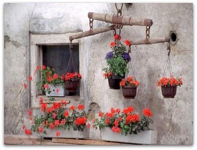 gerani rossi in fiore #fiori alla #finestra