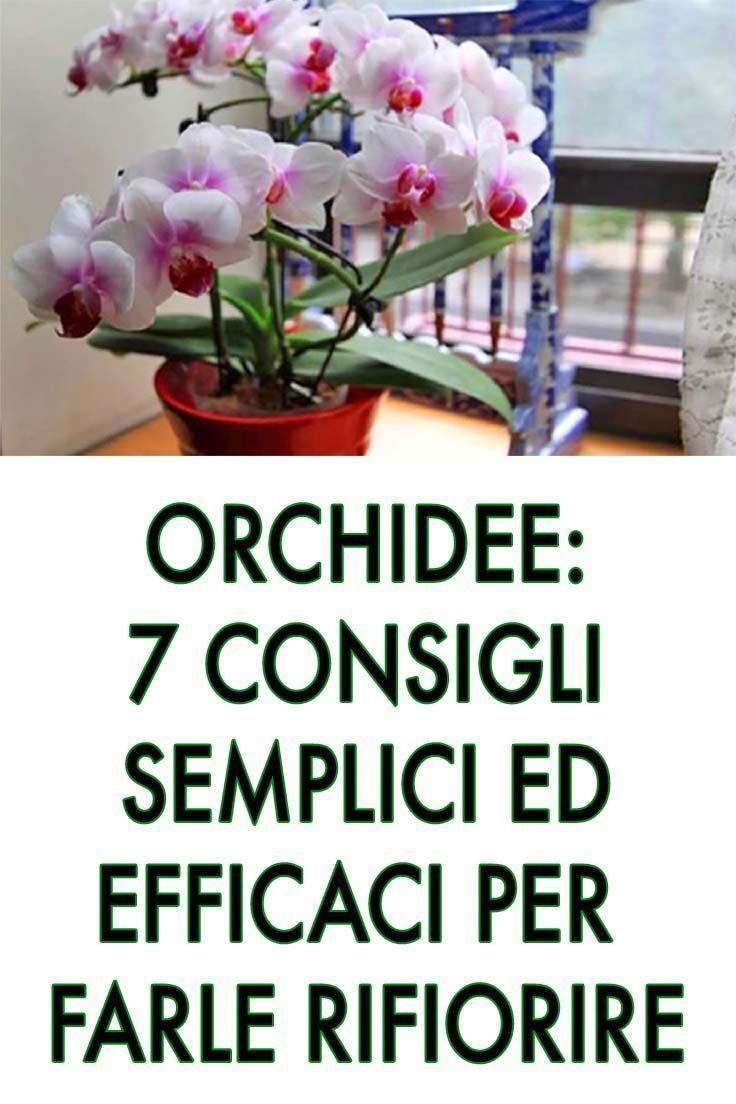 Orchidee Meravigliose Trucchi E Segreti orchidee: 7 consigli semplici ed efficac nel 2020 | orchidee