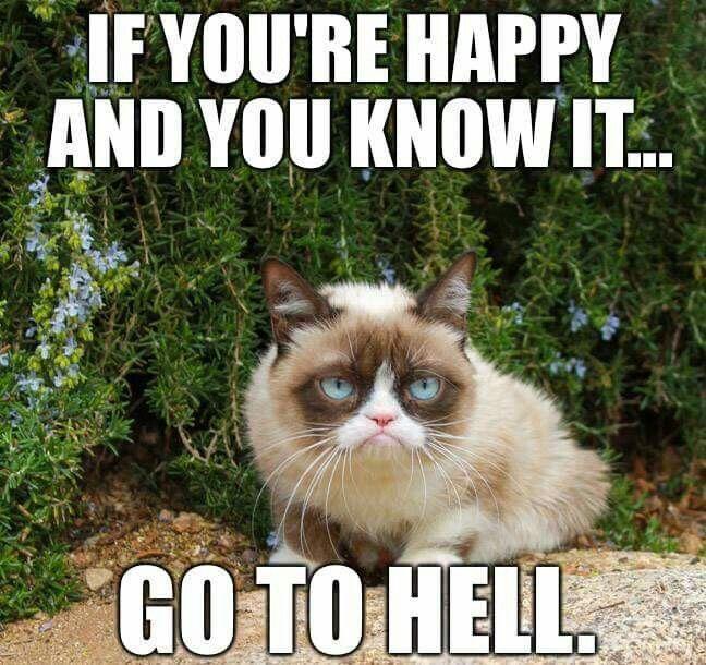I Swear To God Grumpy Cat Is My Spirit Animal Funny Grumpy Cat Memes Cat Jokes Grumpy Cat Meme