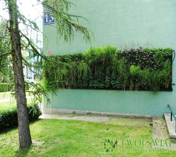 Zielona ściana zewnętrzna - Lublin.