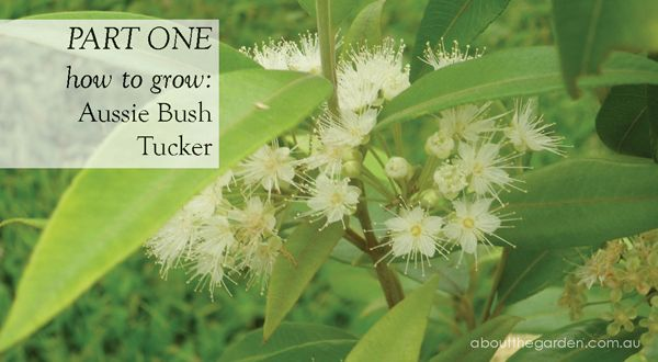Part 1: Growing Aussie Bush Tucker   Lemon Myrtle   Roseleaf raspberry   Wattle   Native Edible Plants   Cuisine   About The Garden Magazine