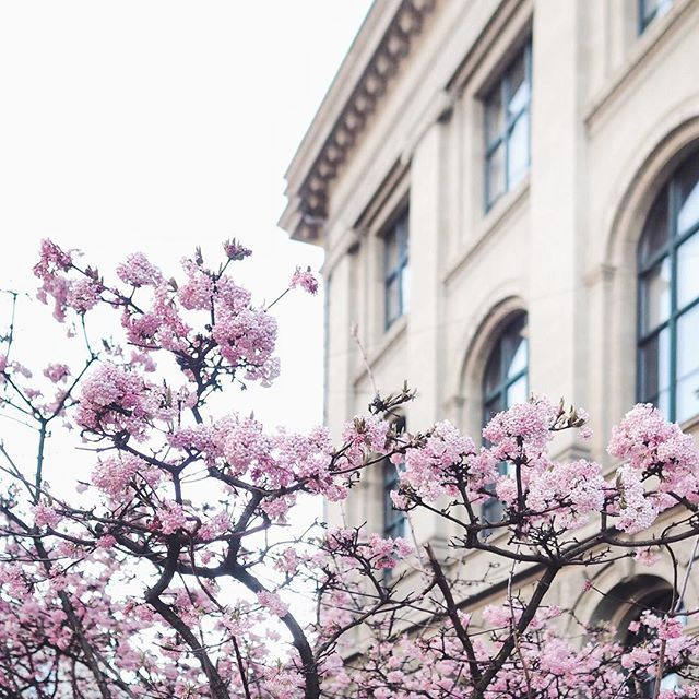 S P R I N G  B L O S S O M S  Morning walk around ETH this morning & caught whiff of these sweet blossoms. Spring is here!!! .  .  .  .  .  .  @visitzurich @myswitzerland #visitzurich #kreis1 #rämistrasse #springvibes #keepexploring #UZH #wanderlust #darlingweekends #stayandwander #goexplore #exploremore #modernoutdoors #thatsdarling #thehappynow #liveauthentic #sourcedadventures #myswitzerland #foodglooby #zurichfoodies #welltraveled #theprettycities #letsgosomewhere