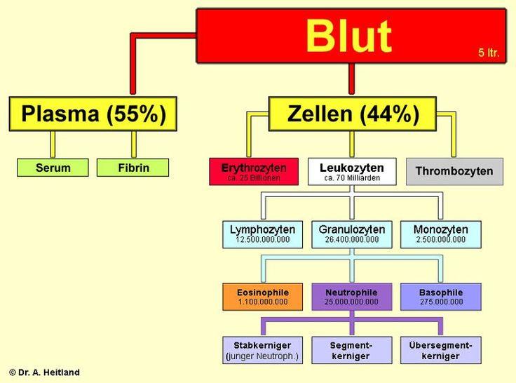 Bestandteile des Blutes   Biologie