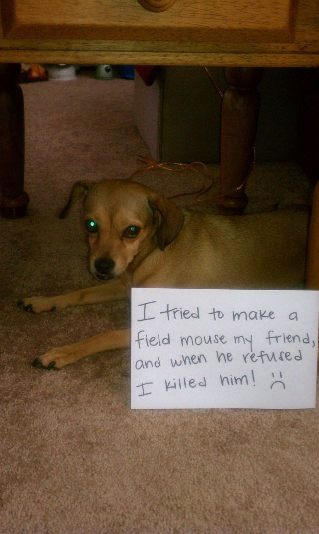 81 best images about Bad dogs and cats lol on Pinterest ...