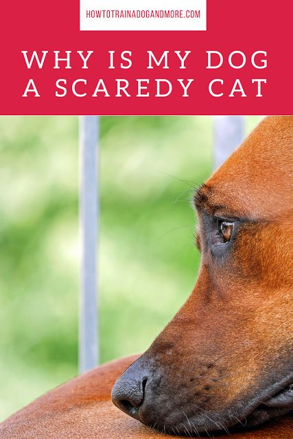 Is your dog fearful? Are you looking for some scared dog tips? ....visit this blog for lots of dog training tips, including barking, biting, aggression, toilet training, jumping, pulling, separation anxiety and more!