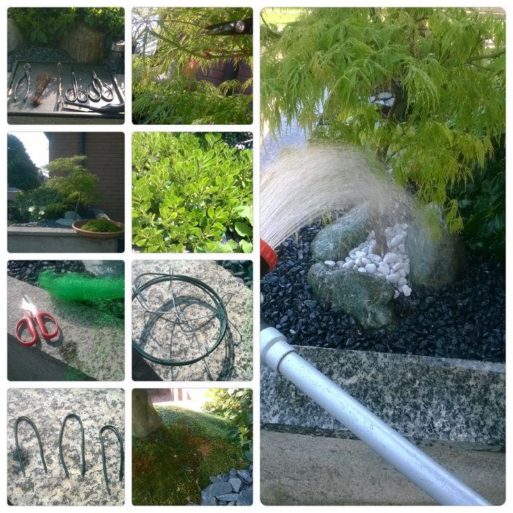 (parte 01) Giardino Giapponese -  Lavori di manutenzione ... cimature di acer deshojo e pitosforo japonico, contenimento crescita per le abbondanti piogge; Rafforzamento copertura muschio con rete anti-merlo .....