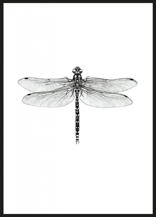 Dragonfly (21x30cm) - Illustrationer - TAVLOR & POSTERS