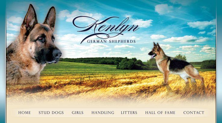 Kenlyn German Shepherds :: The Girls
