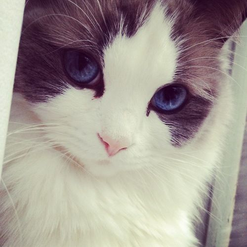 This cat is beautiful.