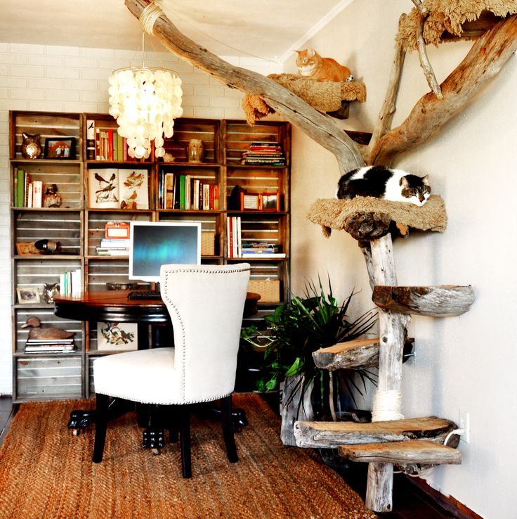 Another view of driftwood cat tree with office space and crate wall. Featuring Kirby (top) and Emily (middle) Rebecca Brittain Photography Clearwater Fl