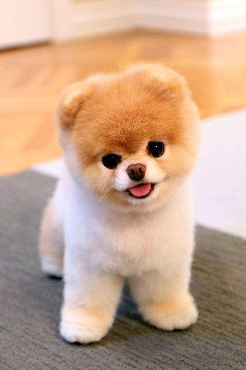 Ranking: Die 20 süßesten Tiere der Welt (4/4) – C