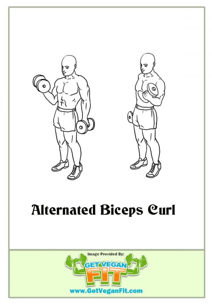 Standing Alternating Bicep Arm Curls Exercise Illustration
