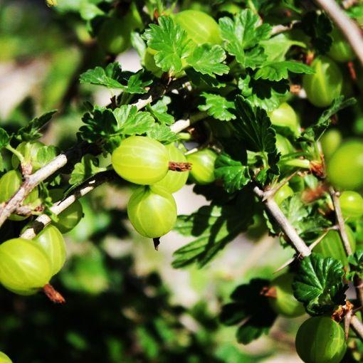 Oltre 25 fantastiche idee su alberi da frutto su pinterest for Piante da frutto online