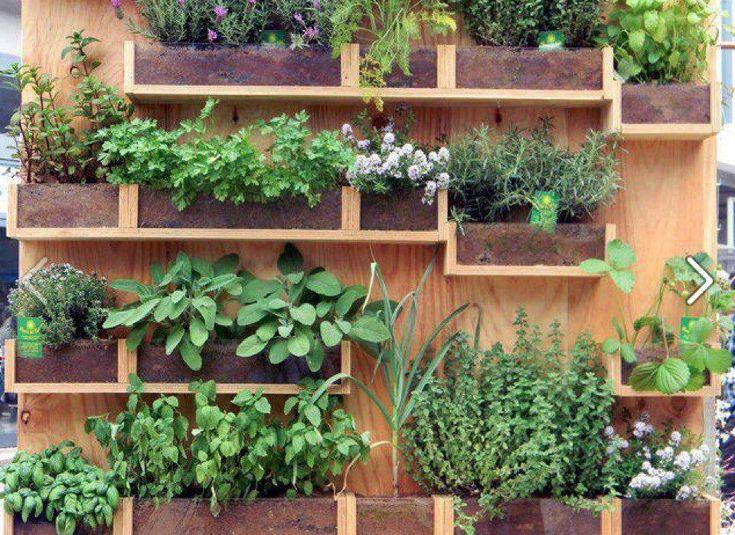 A wall mounted herb garden great space saver gardens vertical pinterest gardens photos - Herb gardens for small spaces gallery ...