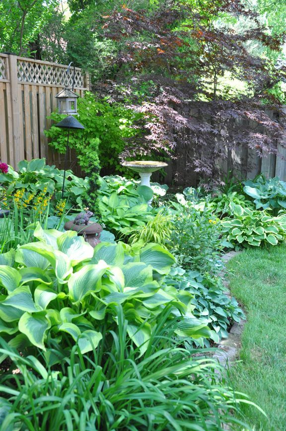 A Shade Garden In Oakville Ontario A Shade Garden In Oakville