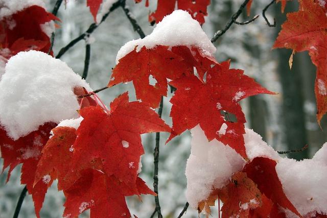 fall is on it's way out as winter peaks it's head in