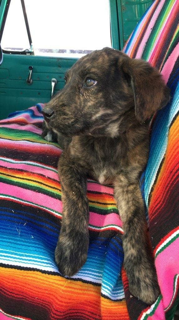 Adopt Skittles On Petfinder Dogs Dog Adoption Labrador Retriever Mix
