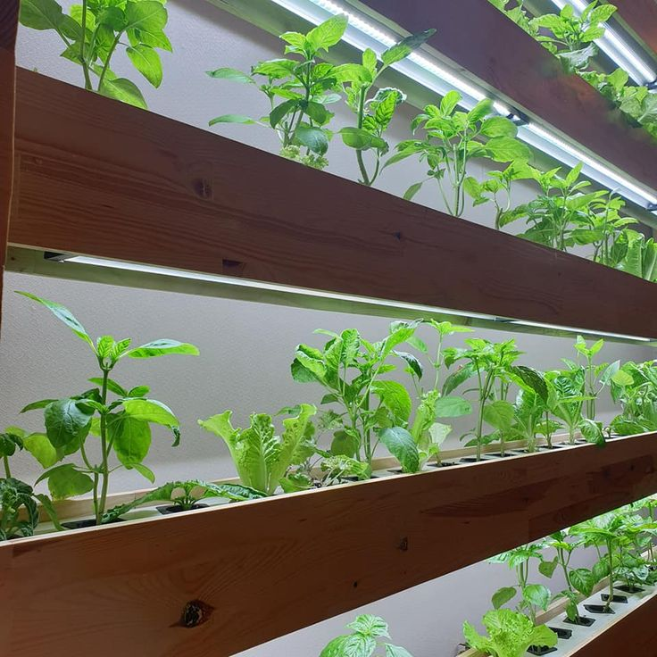 indoor hydroponic system with grow light Grow lights