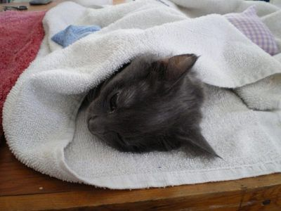 A cat was hog-tied and attached to an explosive before being lit on fire and thrown from a car window. The cat, named Phoenix, later died from her injuries. Demand that the sadistic person who did this be brought to justice.