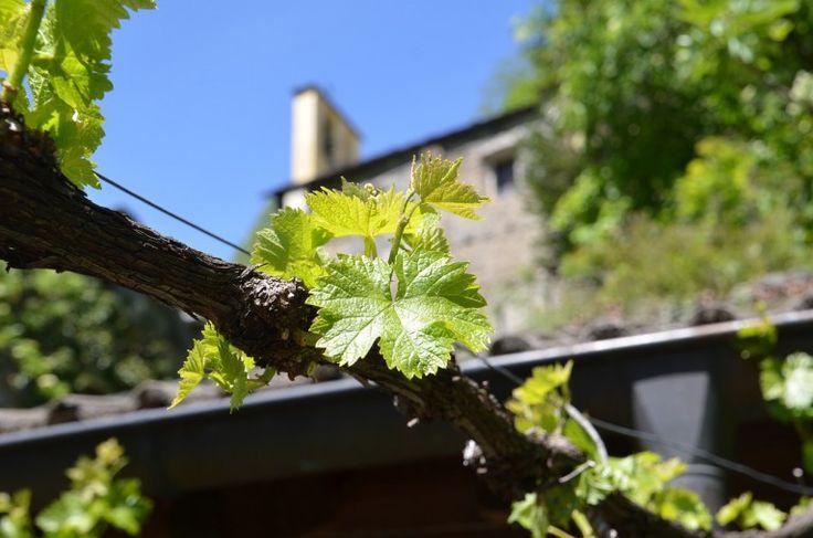 Escapade oenologique en Valais:  Amateurs de bon vin, c'est l'occasion idéale de partir à la découverte de la région où le Cornalin, la Petite Arvine ou encore la Syrah sont rois. Passez un moment privilégié au cœur de la plus importante région viticole de Suisse et apprenez-en davantage sur sa culture.