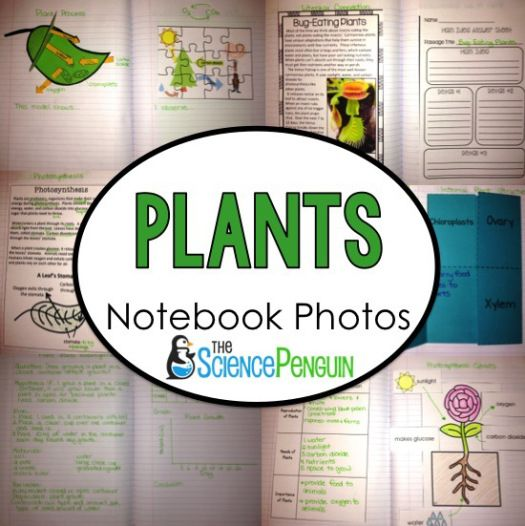 Plants Science Notebook Photos--photosynthesis, carbon dioxide-oxygen cycle, external and internal structures, and carnivorous plants
