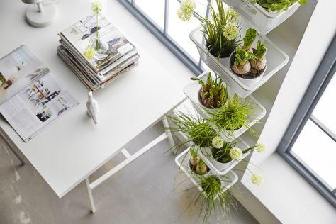 ALGOT wandrail en mand | #IKEA #IKEAnl #inspiratie #wooninspiratie #werkplek #bureau #werken #urbangardening #urbanjungle #planten #bloemen #kruiden