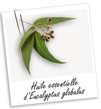Huile essentielle Eucalyptus globulus BIO Aroma-Zone - diffusé dès le début de rhume