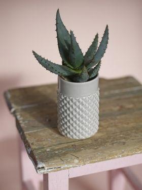 Ment - Brodd Fasetvase vase cacti cactus kaktus