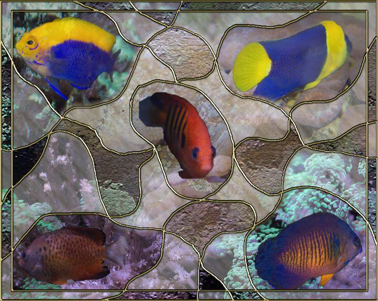Lesson 12 Framed Aquarium